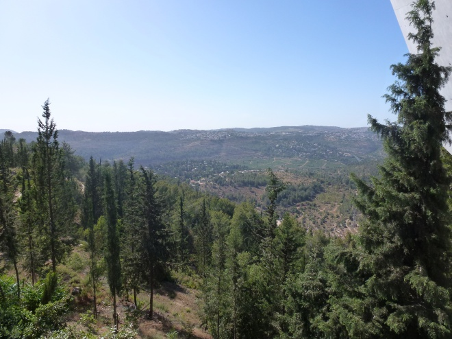 View of Jerusalem forest upon exit.