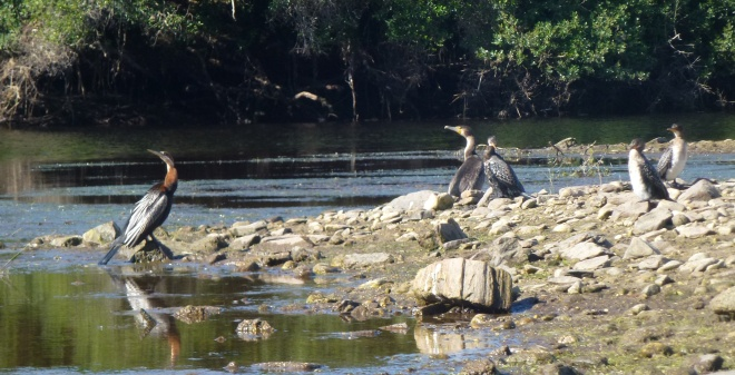 Wildlife at Wilderness National Park