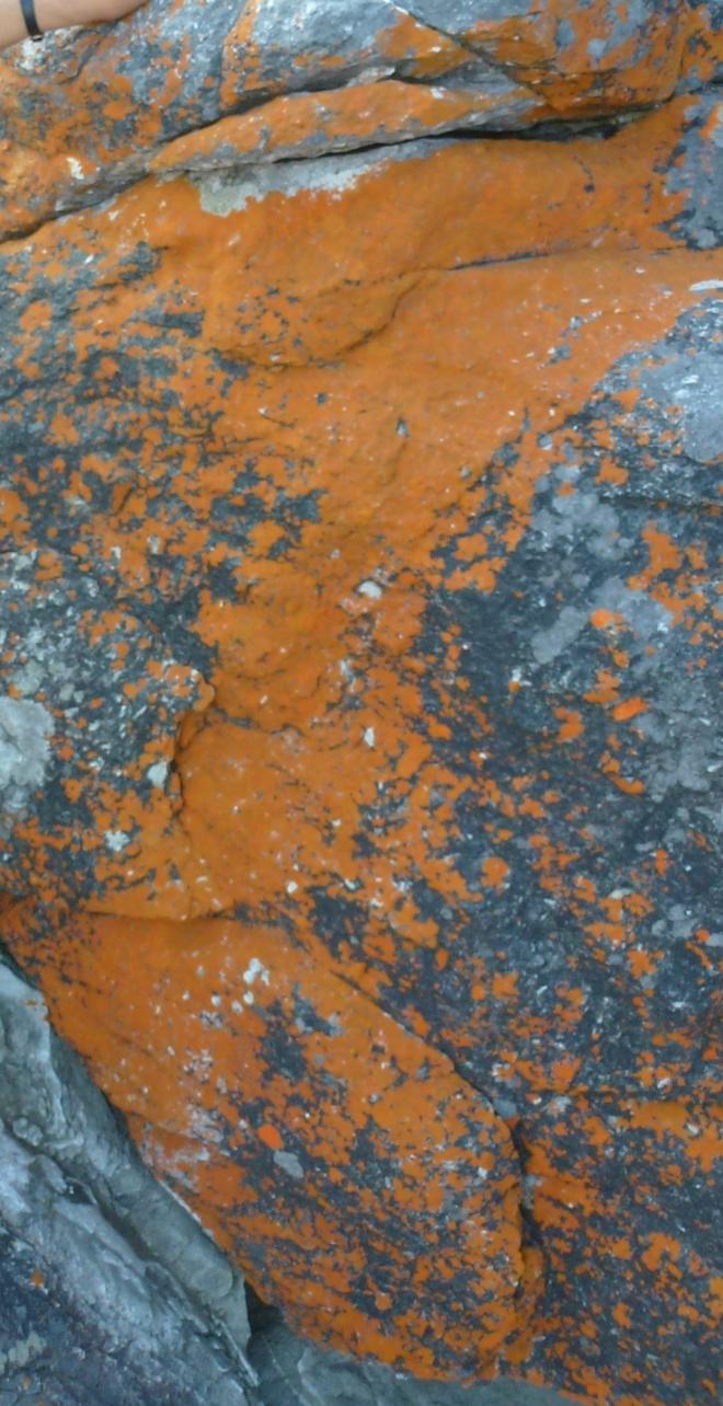 Lichen at Tsitsikamma