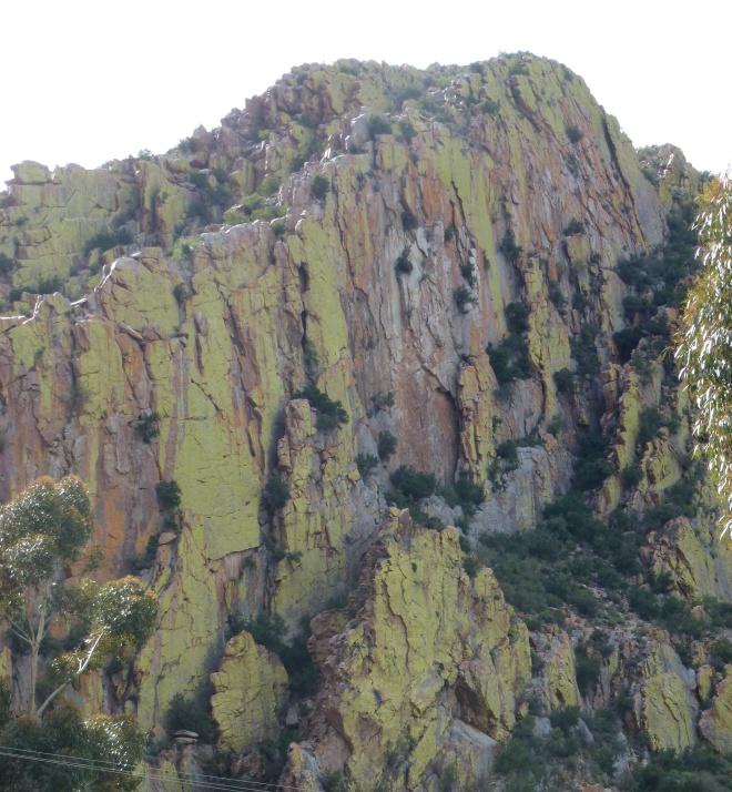 Lichen at Prince Albert