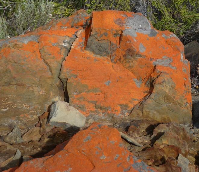 Lichen at Barrydale