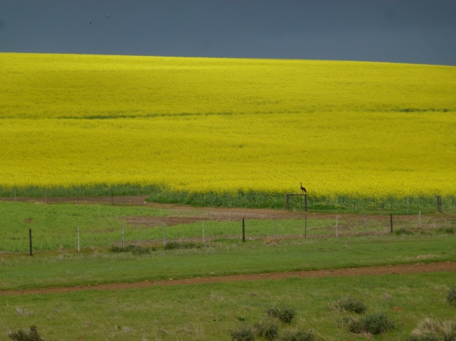 The landscape changed again as we moved inland on the way to Hermanus