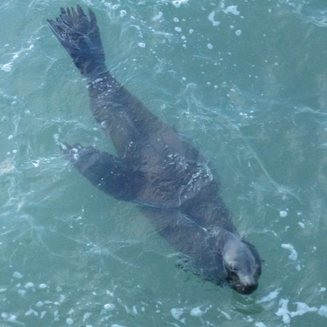 Who's a good seal? Huh? Who's a good seal? You are!