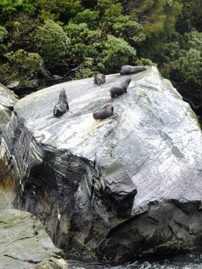 Milford Sound residents
