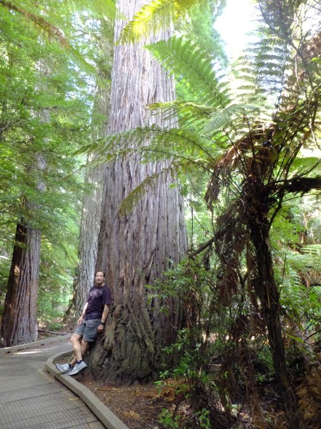 bill in redwoods