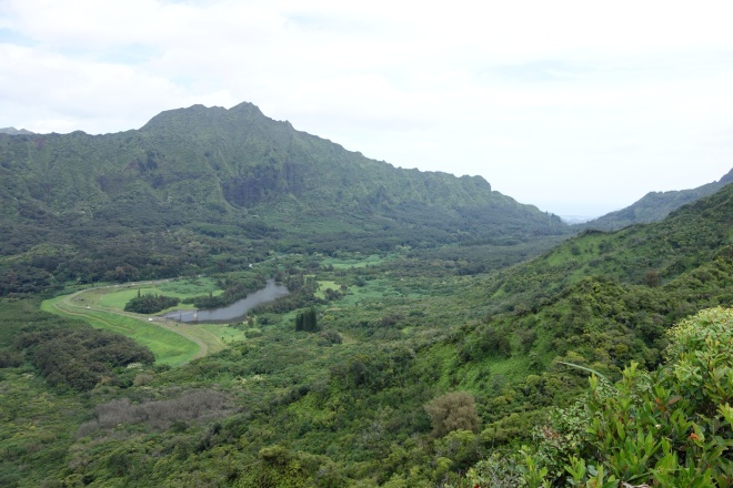 view from pahoa trail, manoa falls hike