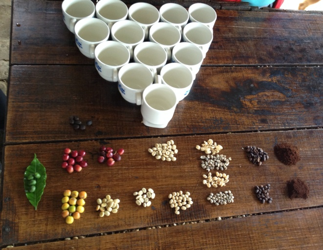 Coffee in every form from right off the tree to ready to brew